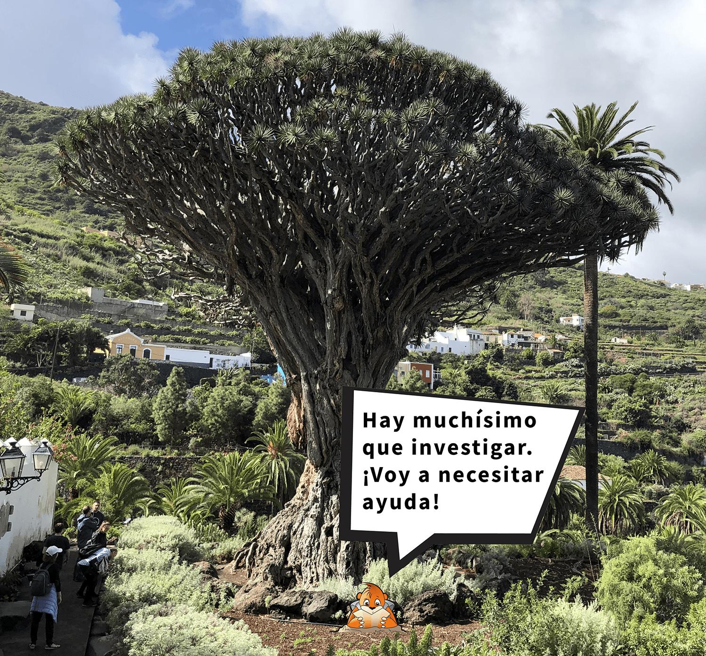 Marco Topo junto al Drago Milenario de Icod de los Vinos, Tenerife